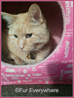 Carmine hangs out in his pink kitty cube.