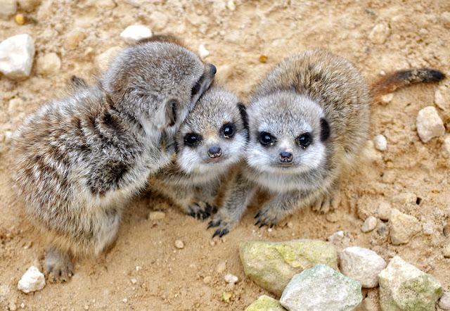 Three cute images time (hora de tres imágenes tiernas) animals