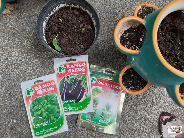 plant seeds in Shopee