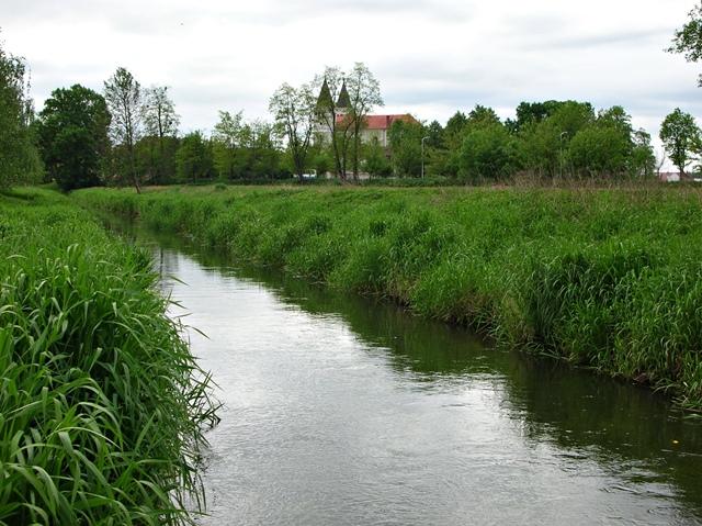 zieleń, miasto, Gniła Obra, trzcina