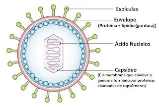 virus - Pragas e Eventos