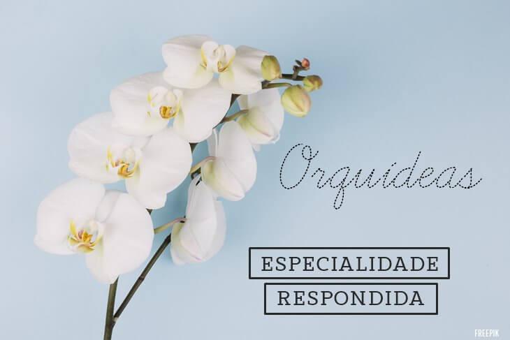 Especialidade-de-Orquideas-Respondida