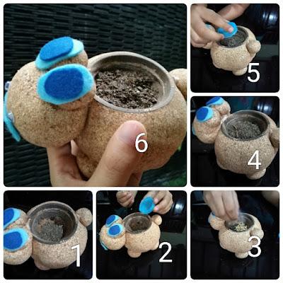 Cara menanam millet di boneka potty