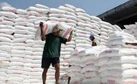Petani Kobi Keluhkan Kelangkaan Pupuk Bersubsidi, Dinas Akui Jatah Tahun Ini Terbatas