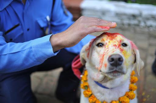 kukur tihar in nepal | Dog festival in nepal