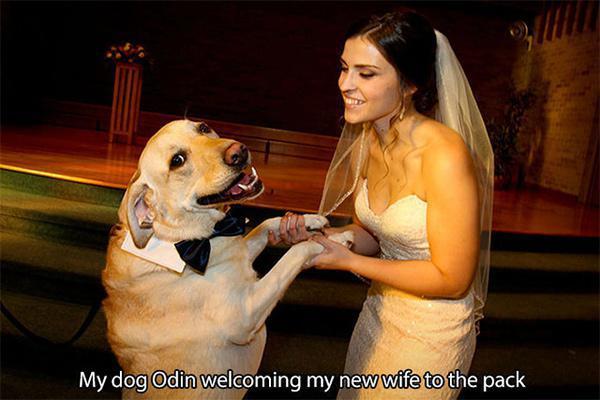 φωτογραφίες φιλόζωοι σκύλοι