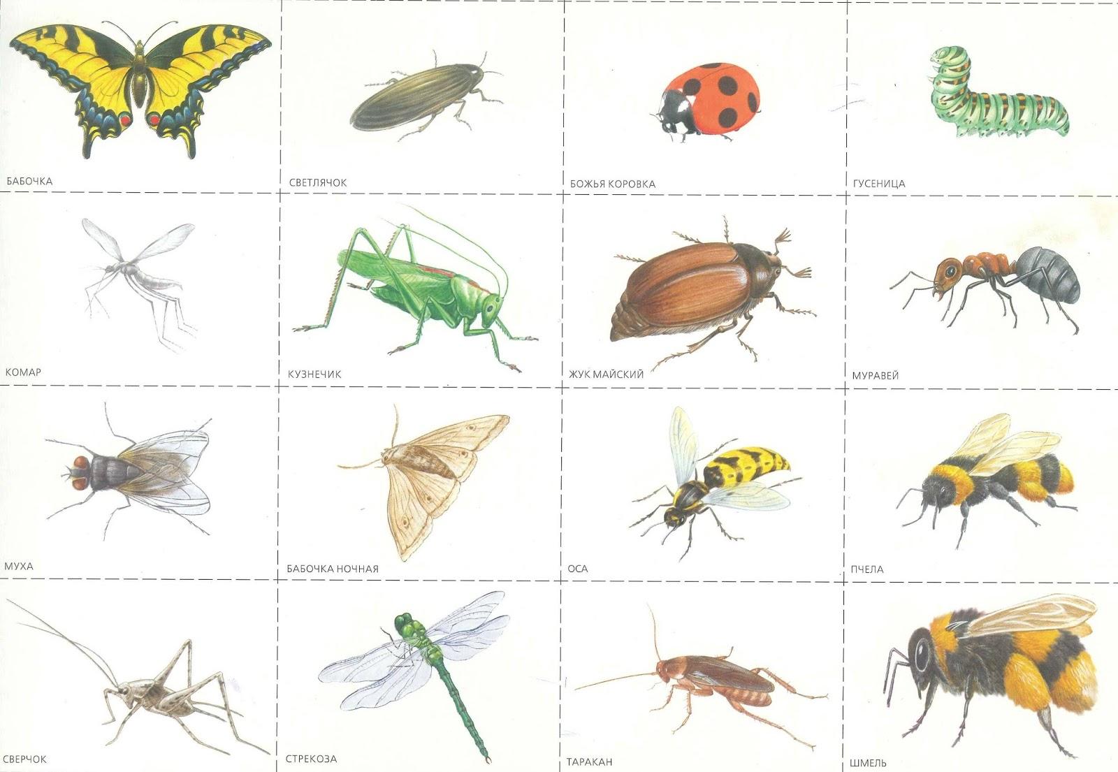 Любимая, насекомые картинки для детей дошкольного возраста