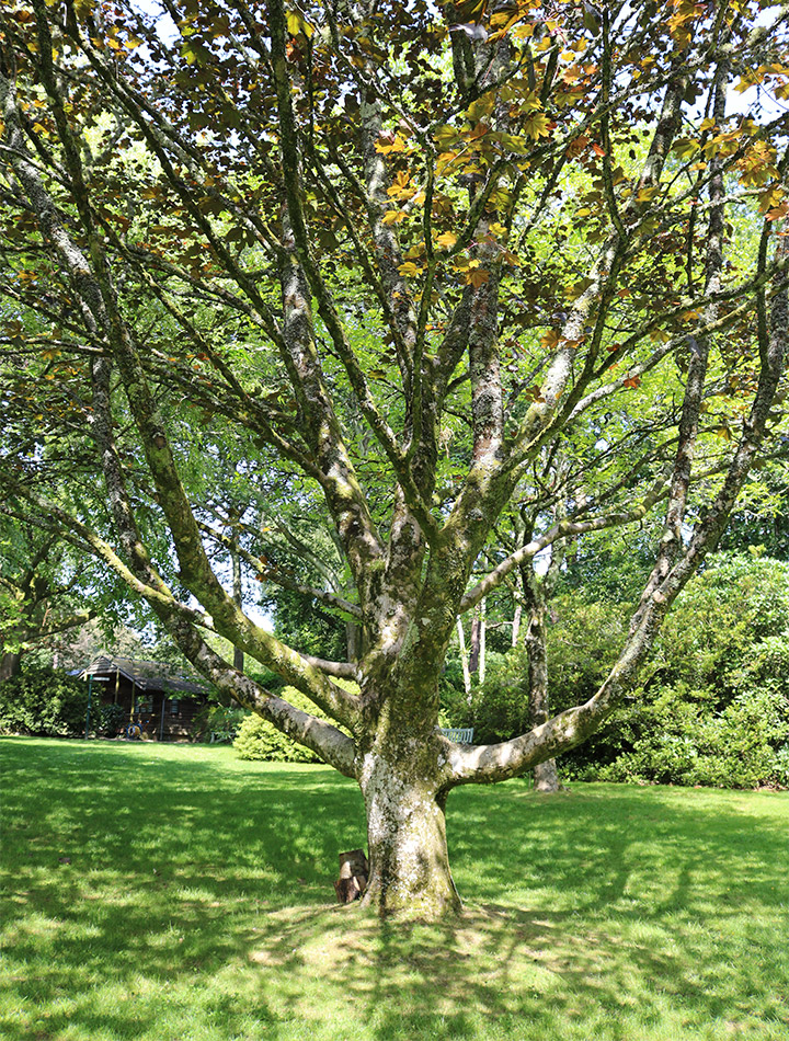 Autumn trees at Pinetum Gardens Cornwall
