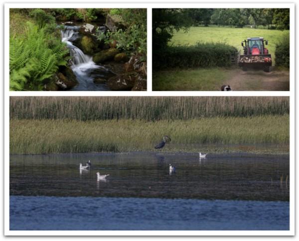 Dartmoor Stream, Farming Nethercott, Estuary Birds - Photo copyright Nina Constable Media (All Rights Reserved)