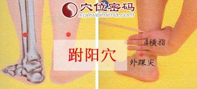 跗陽穴位 | 跗陽穴痛位置 - 穴道按摩經絡圖解 | Source:xueweitu.iiyun.com