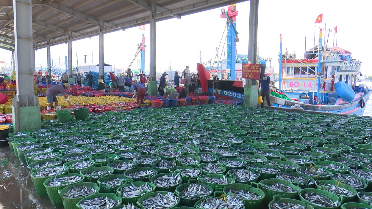 Ngư dân tỉnh Ninh Thuận vào mùa chính vụ cá Nam
