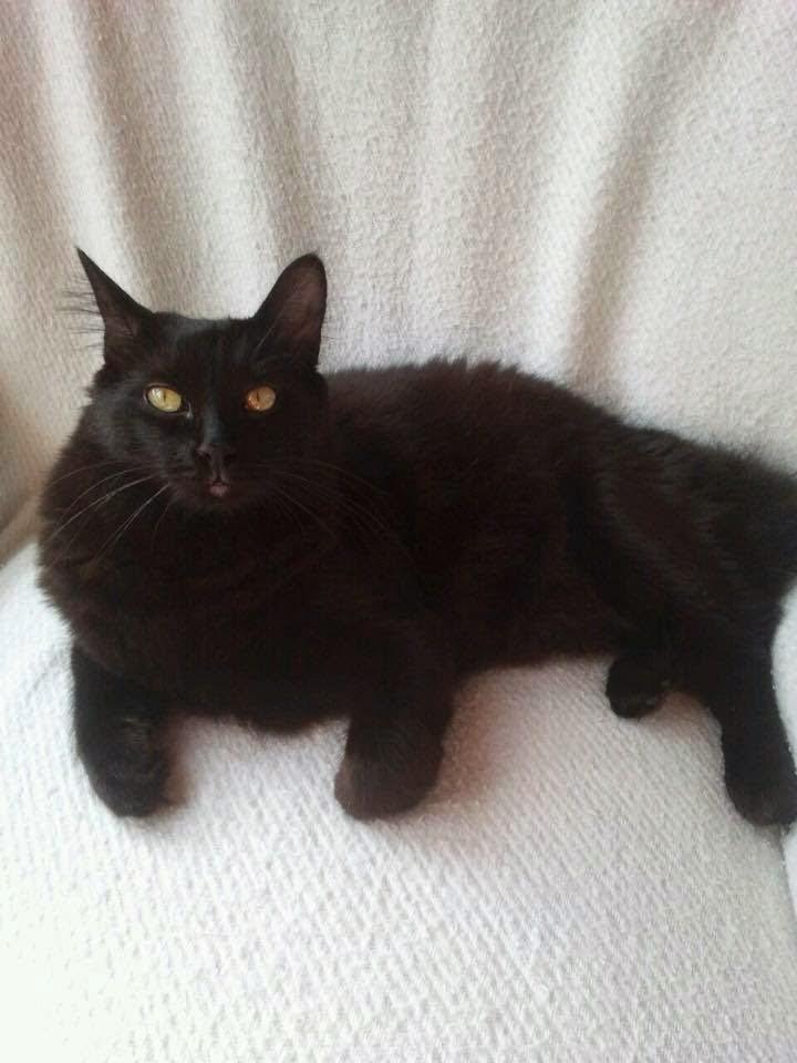 tratamiento de giardia en gatos