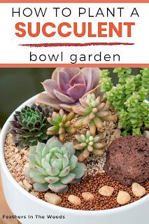 Tutorial for succulent bowl garden.