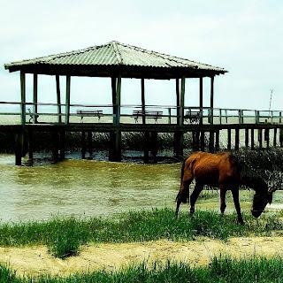 Cavalo em frente ao trapiche