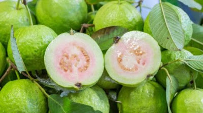 Fruit Image Of Guava