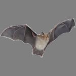 bat in spanish