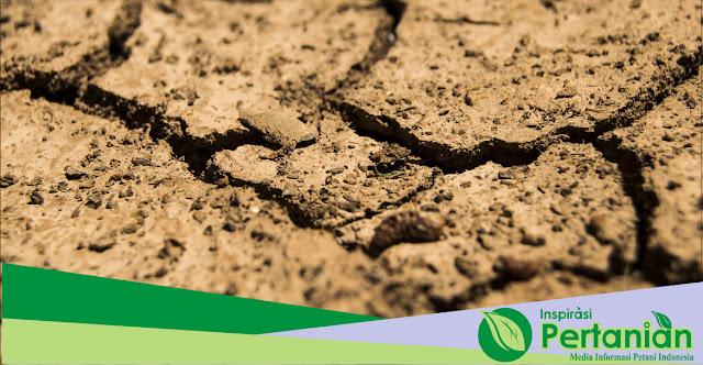 Upaya Meningkatkan Kesuburan Tanah Pada Kondisi Lahan Tertentu