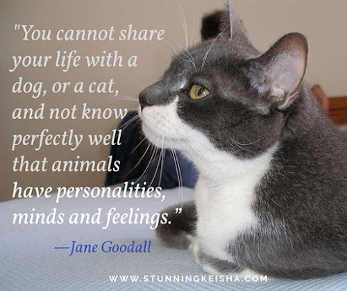 Wednesday Wisdom: Jane Goodall