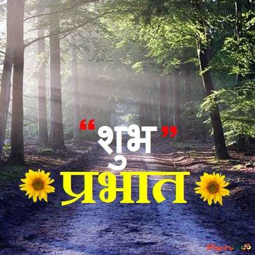 morning in forest, सुप्रभात, शुभप्रभात, good morning in hindi, images, photo, pictures, suprabhat, shubh prabhat, marathi