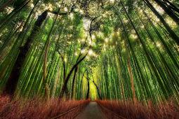 Berlibur di Kyoto Belum Lengkap Tanpa Kunjungi 5 Tempat Ini!