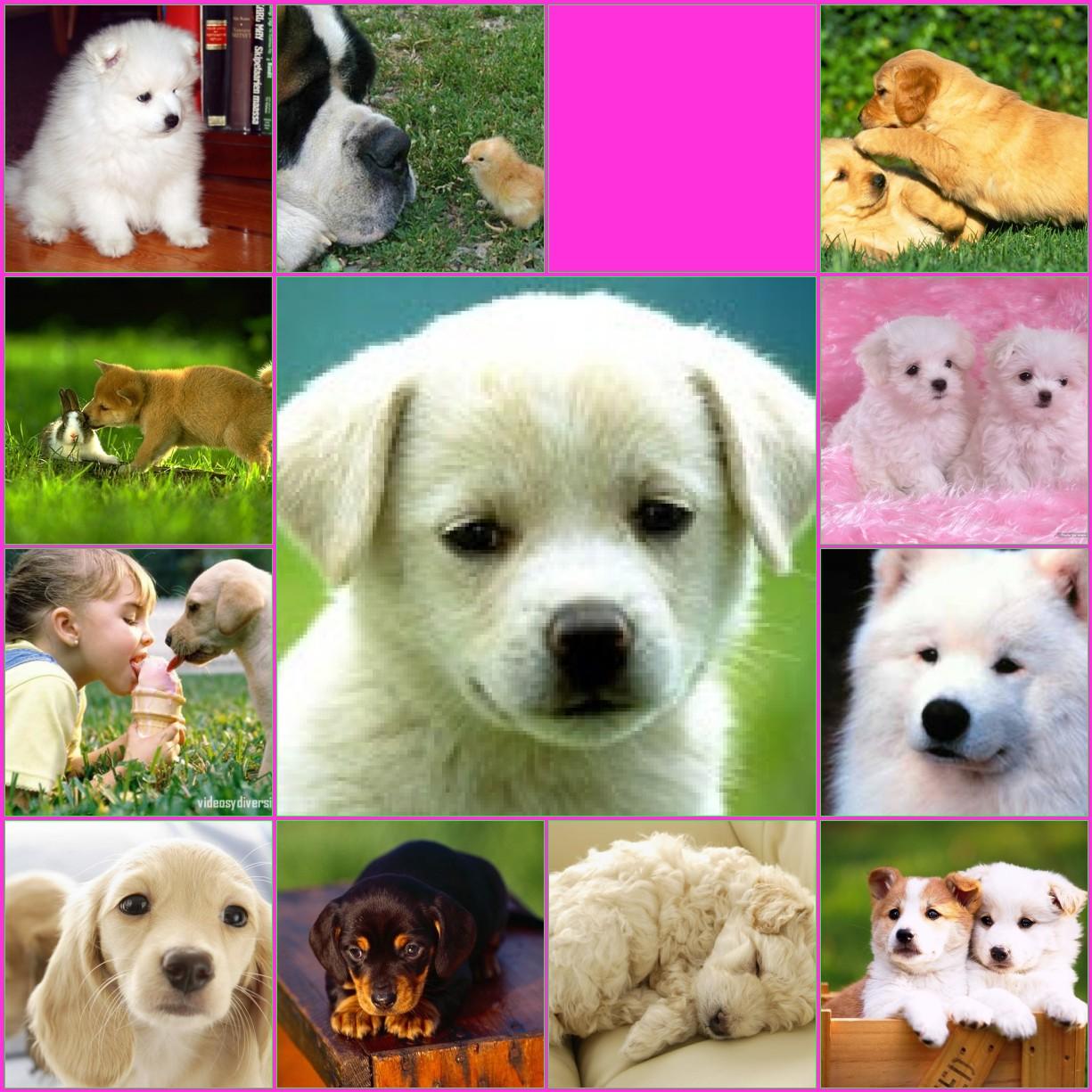 fotos de perritos - photo #29