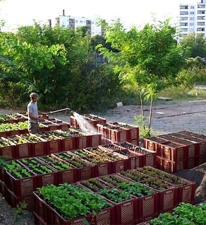 Urban Farming Berlin