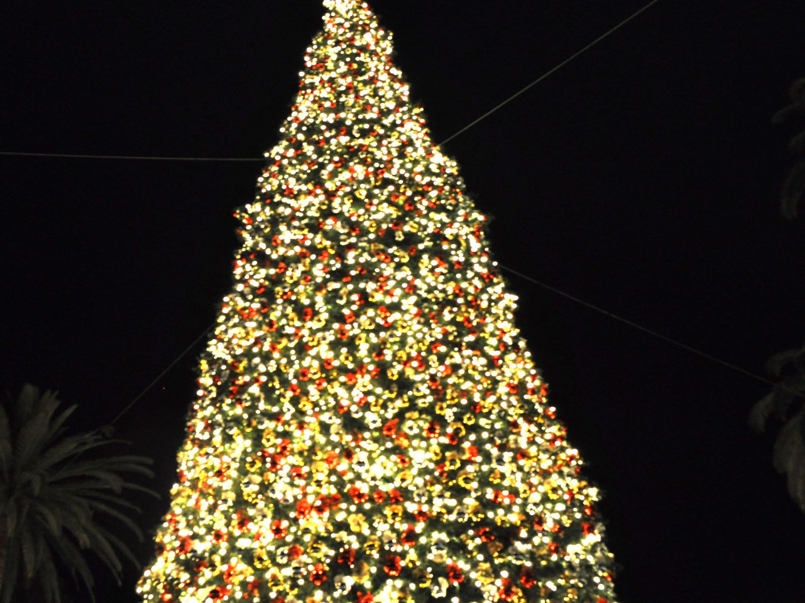 Greek Fisherman, City Grill & Meloncino: Giant Christmas Trees