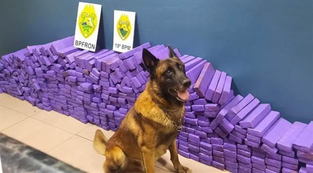 Polícia apreende mais de 300 kg de maconha