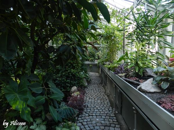 gradina-botanica-belgrad