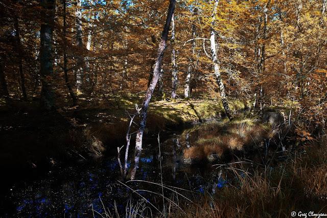 Canaux de la mare aux Evées à l'automne, Forêt de Fontainebleau