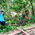 Anggota Satgas TMMD Bantu Warga Potong Pohon Roboh
