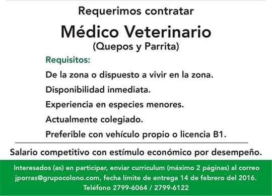 Bolsa de empleo pococ en l nea gu piles m dico veterinario for Ofertas de empleo en la linea