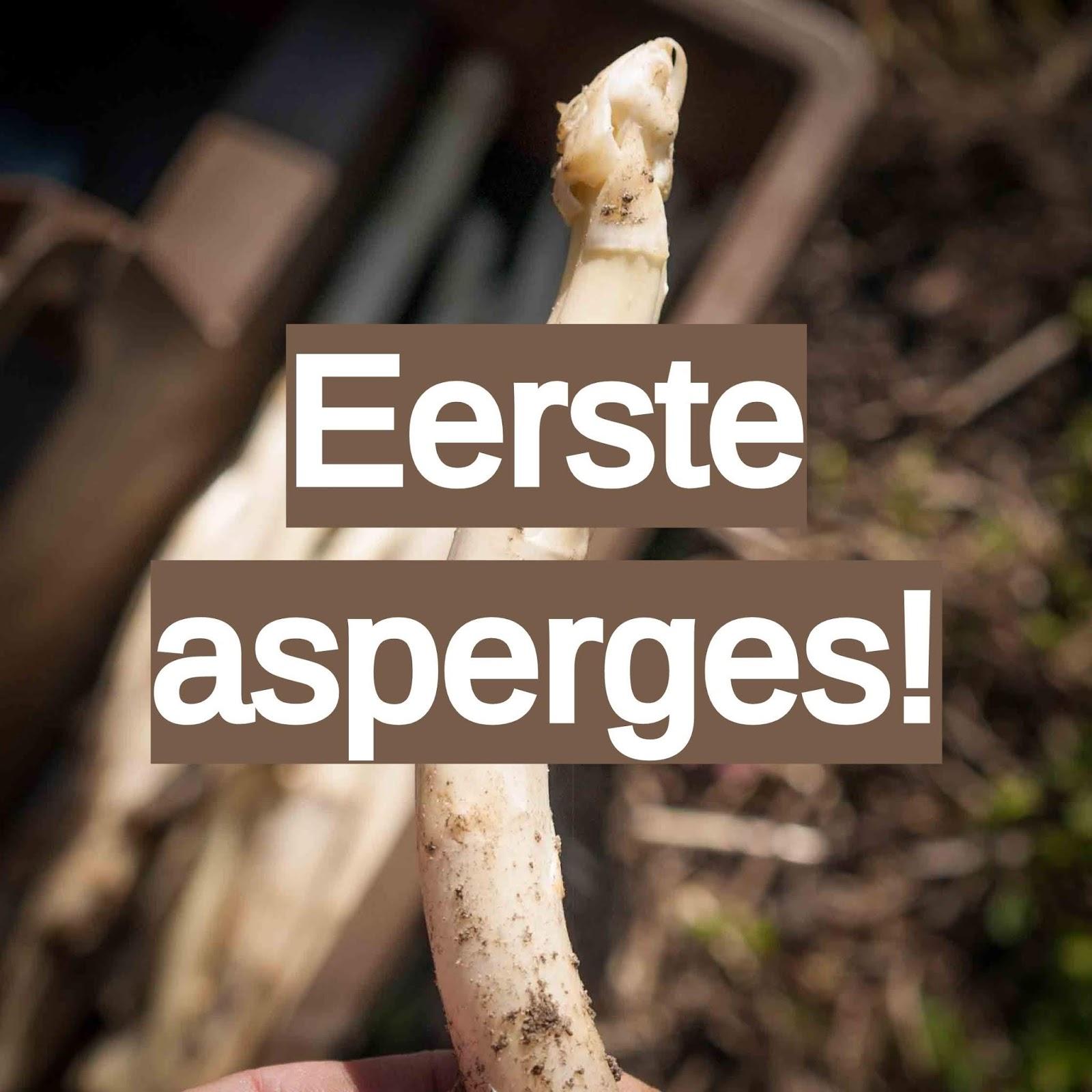 asperges moestuin volkstuin