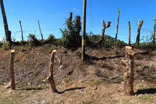 fence posts on farm in Puriscal