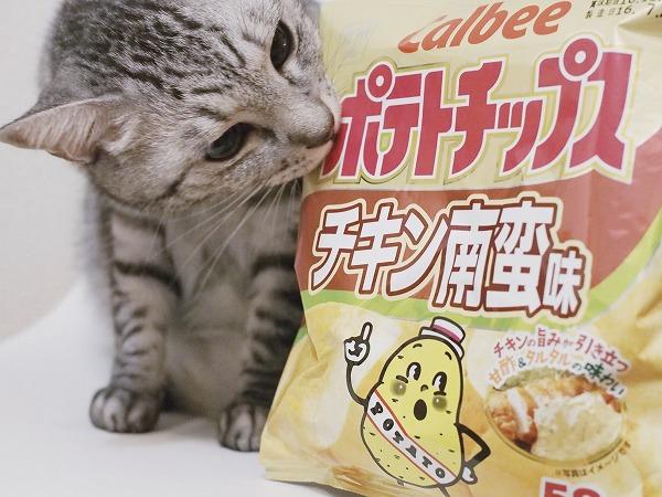 サバトラ猫とポテトチップスチキン南蛮味