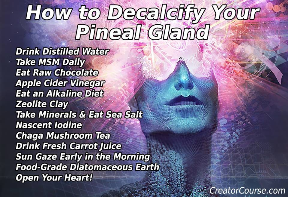 Decalcified pineal gland