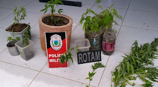 Homem é preso suspeito de cultivar maconha no quintal de casa no interior da Paraíba