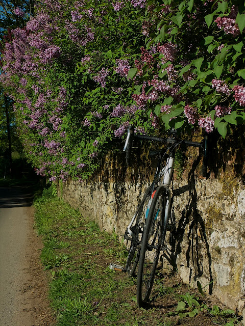 cycling flowers leaned against the wall