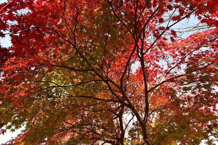 桜山公園の紅葉7