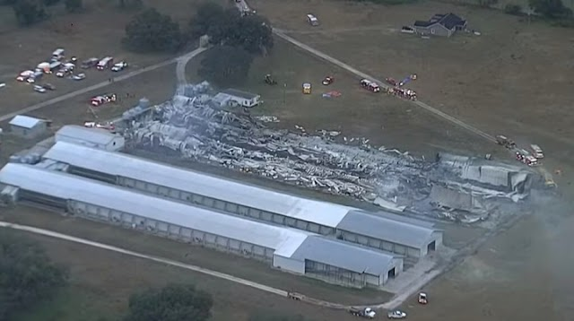 At Least 240,000 Chickens Are Killed in Fire at Florida Egg Farm