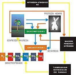 Gambar Peredaran nitrogen