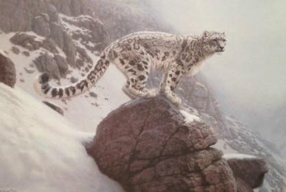 Richard Burns Snow Leopard