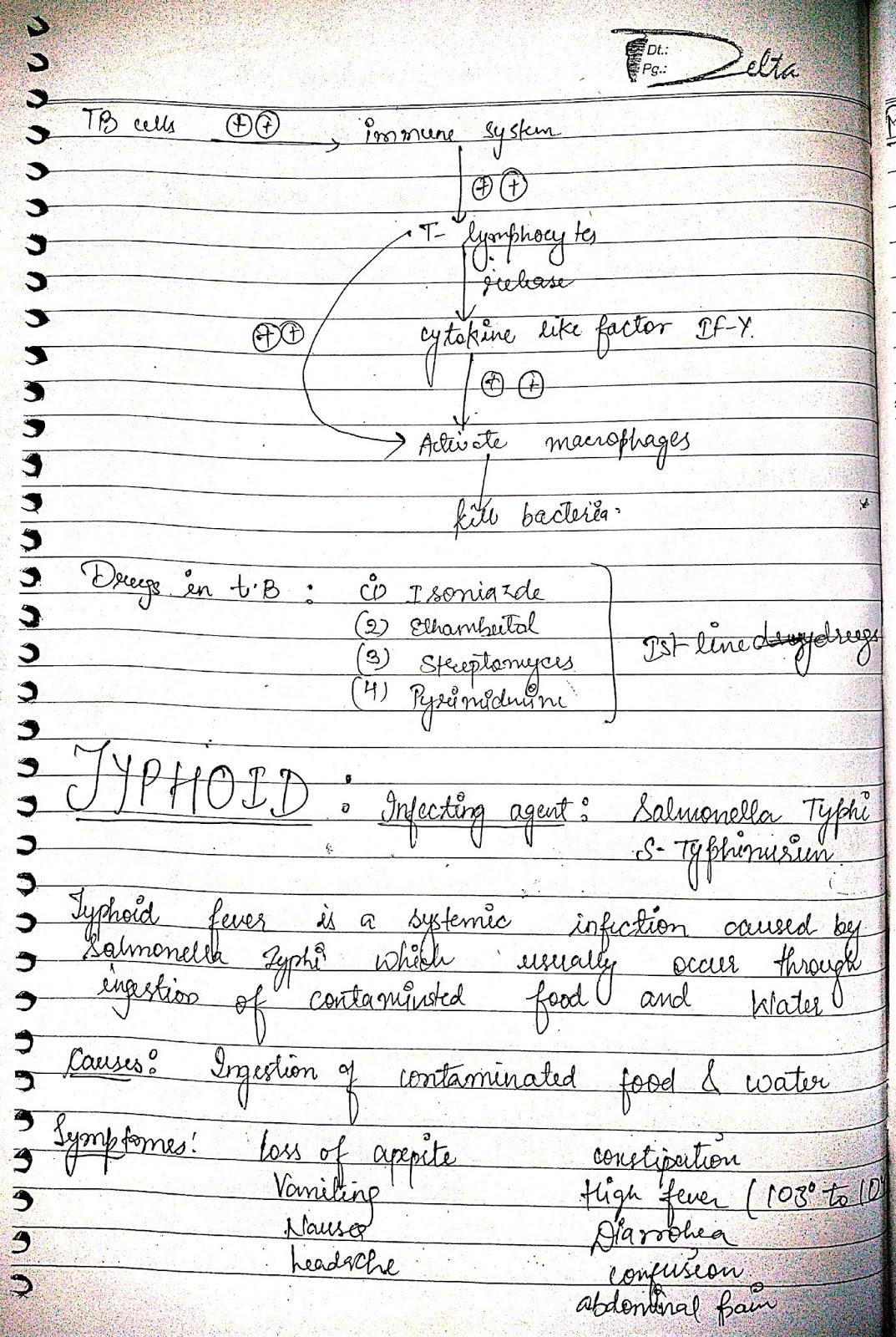 pathophysiology - typhoid