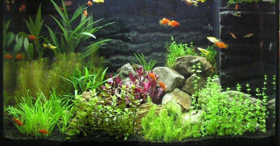 Natural Planted Aquarium
