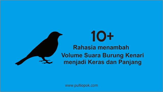 10 Rahasia Menambah Volume Suara Burung Kenari Menjadi Keras Pulti Opok