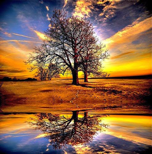 http://1.bp.blogspot.com/-HdIZ1XTsYqo/VJe1Mi_u2FI/AAAAAAAAJGc/PjgxJFfjSII/s1600/sunset-with-tree.jpg