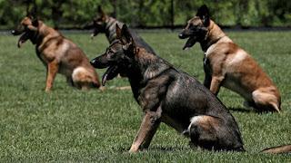 صور كلاب وانواع مختلفة