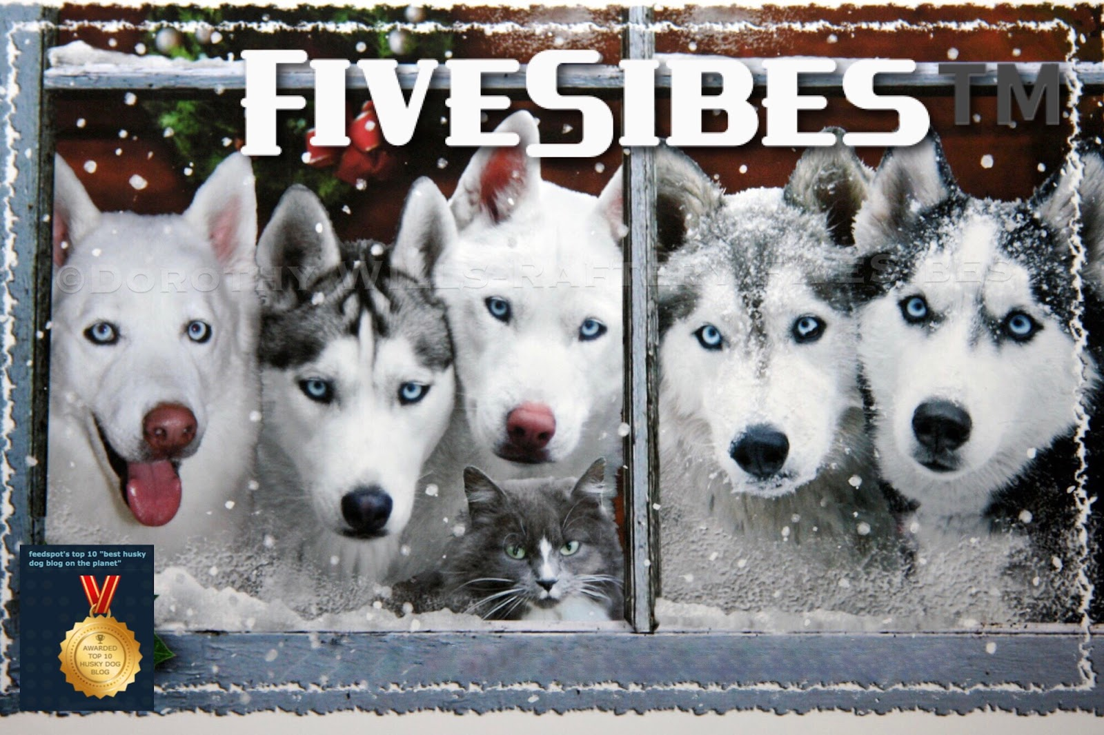 FiveSibes™