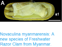 https://sciencythoughts.blogspot.com/2018/12/novaculina-myanmarensis-new-species-of.html