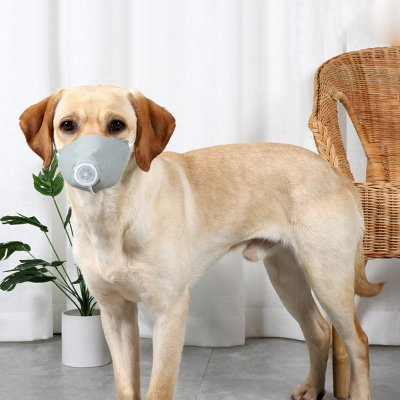 dog with mask searching corona patient